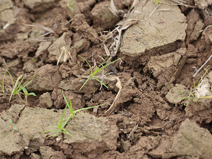 Researchers Study Fundamental Interactions in Soil Communities